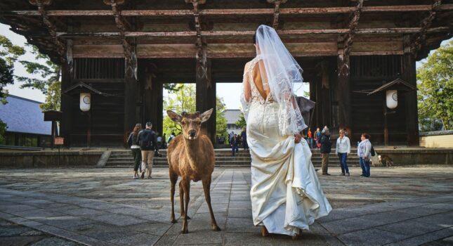 Problemy podczas wesela: płakać czy śmiać się?