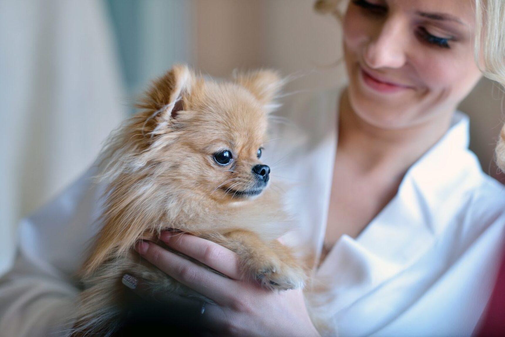 Zwierzę na ślubie – jak wyróżnić ukochanego pupila?