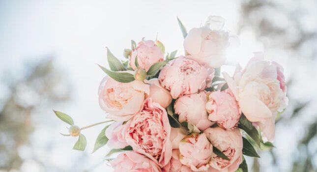 """Bukiet ślubny z piwonii - kiedy """"róża bez kolców"""" kwitnie i jakie jest jej znaczenie?"""