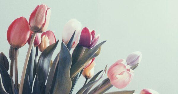 Tulipany na bukiet ślubny - czy to dobry wybór? Z jakimi kwiatami je połączyć?