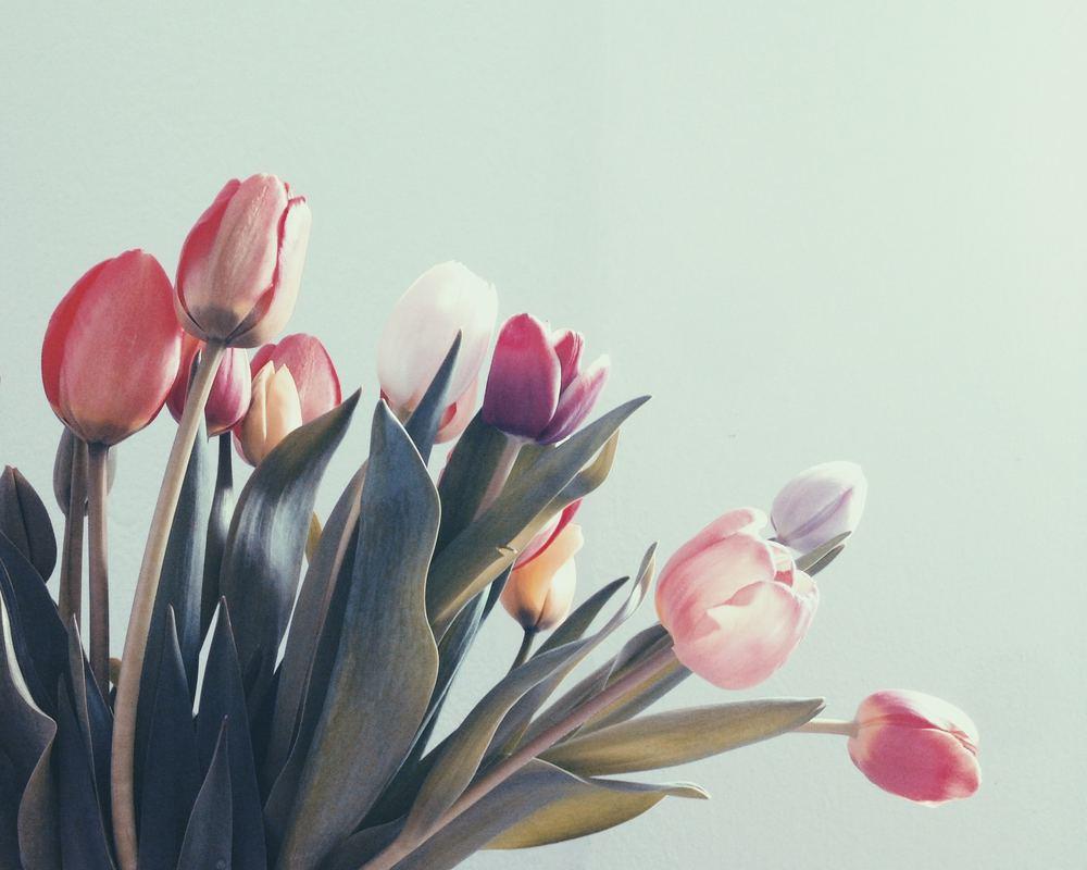 Tulipany na bukiet ślubny – czy to dobry wybór? Z jakimi kwiatami je połączyć?