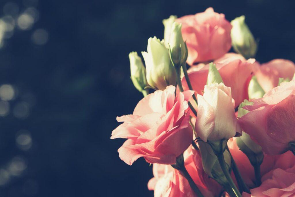 Eustoma idealna na bukiet ślubny? Sprawdź, jakie są kolory i kiedy eustoma kwitnie