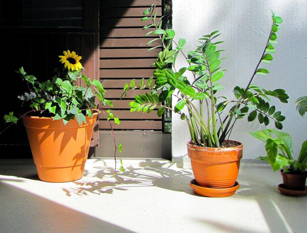 Kwiaty doniczkowe domowe