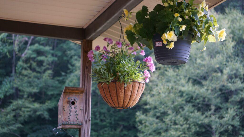 kwiaty doniczkowe cieniolubne na balkonie
