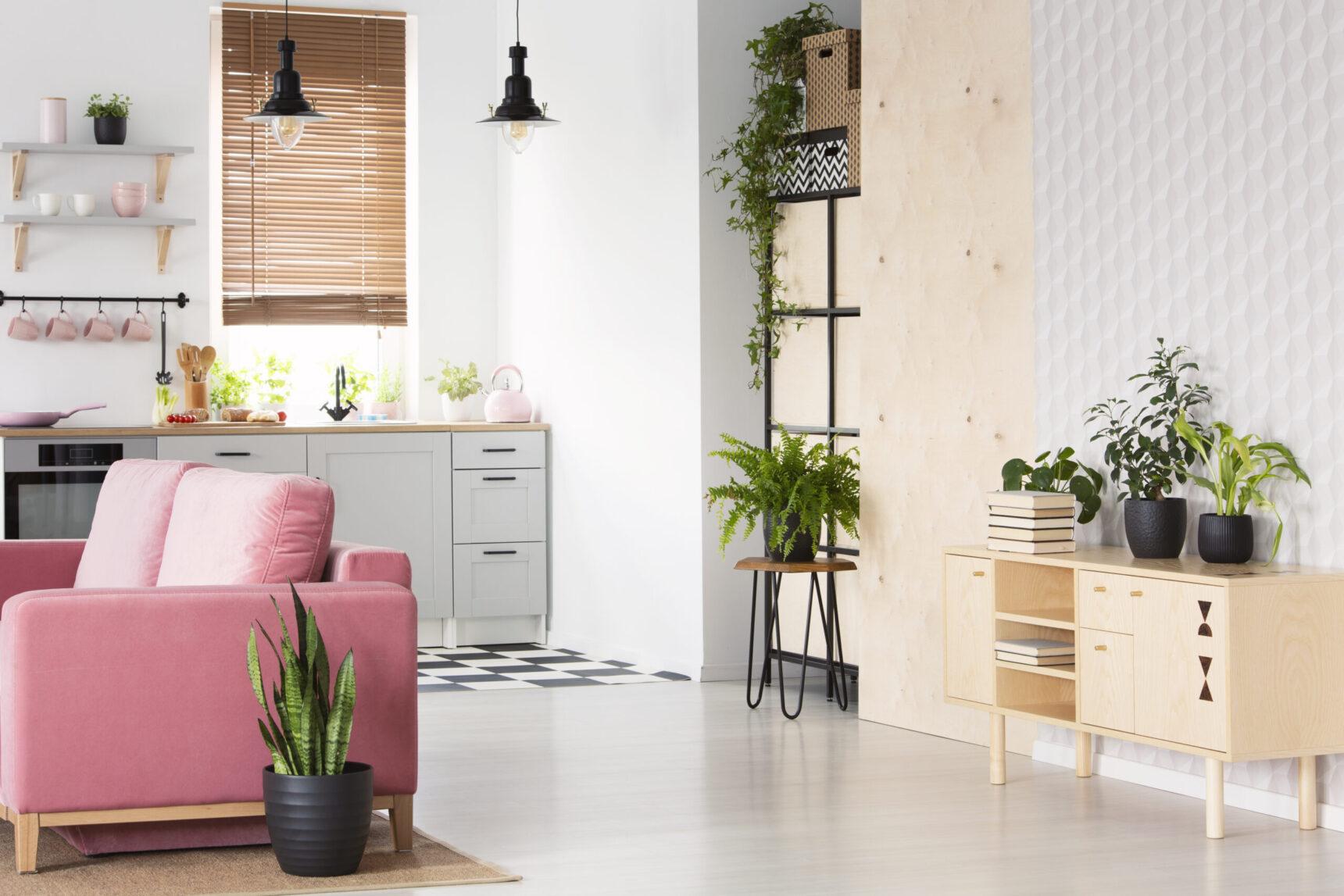 Kwiaty doniczkowe cieniolubne idealne do mieszkania i na balkon
