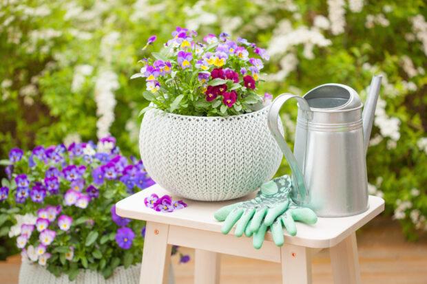 Kwiaty balkonowe – te rośliny pięknie go ozdobią!